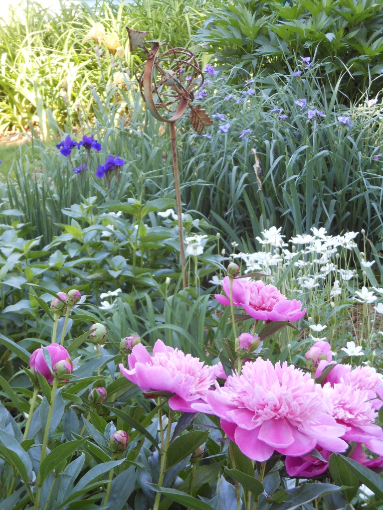 Peonies, Anemones, and Dwarf Siberian Irises fill the garden with color each Spring.