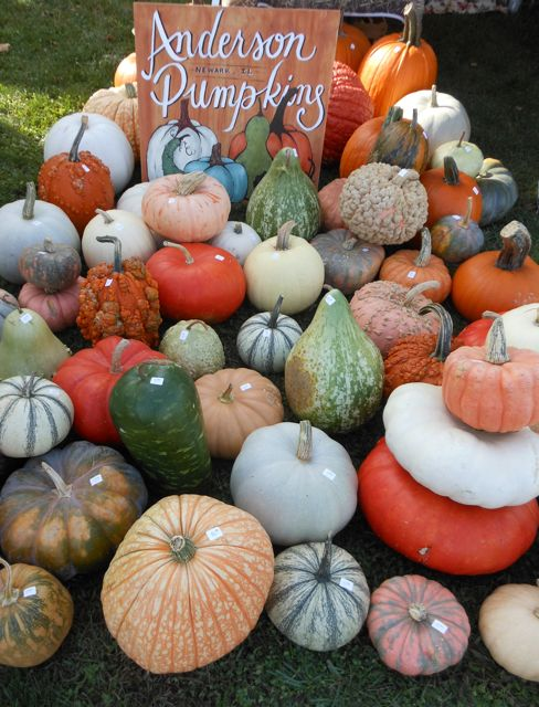 Anderson Pumpkins, in Newark, Illinois, grows so many wonderful varieties of pumpkins and gourds!